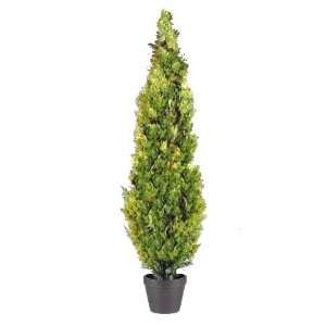 National Tree Company LMC 700 72 72 Inch Arborvitae Tree